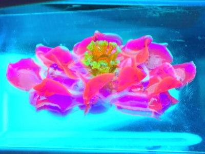 ガラス絵の具で3D睡蓮